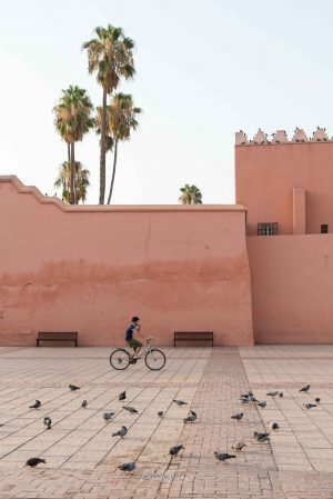 Morocco, Marrakech, Bike, Brad Geddes, Brad Geddes Photography, Palm Tree, Bike rider, Street Photography, Birds, Wall art