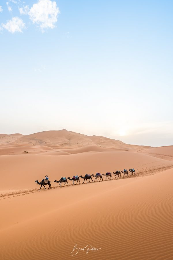 Morocco, Desert, Brad Geddes, Brad Geddes Photography, Sahara Desert, Sahara, Wall Art, Camel, Sand, Sand Dunes
