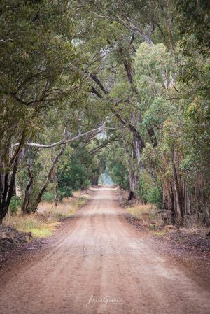Dirt Road, Country Victoria, Road, Leading Lines