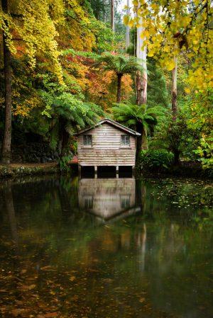 Alfred Nicholas Gardens, Autumn, Dandenong Ranges, Brad Geddes Photography
